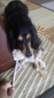 ララ母の犬バカ日記-110901_1024~010001.jpg