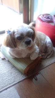 ララ母の犬バカ日記-110901_1024~020001.jpg