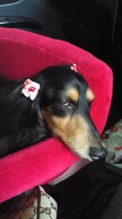 ララ母の犬バカ日記-110904_0702~010001.jpg