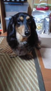 ララ母の犬バカ日記-110906_1905~010001.jpg