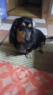 ララ母の犬バカ日記-110909_1920~020001.jpg