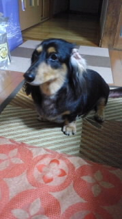 ララ母の犬バカ日記-110909_1920~010001.jpg