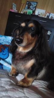 ララ母の犬バカ日記-110910_0706~010001.jpg