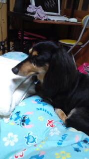 ララ母の犬バカ日記-110913_2103~010001.jpg