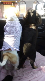 ララ母の犬バカ日記-110914_0922~010001.jpg