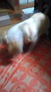 ララ母の犬バカ日記-110915_2002~010001.jpg