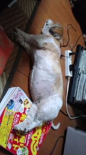 ララ母の犬バカ日記-110915_2012~010001.jpg