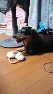 ララ母の犬バカ日記-110915_2012~020001.jpg