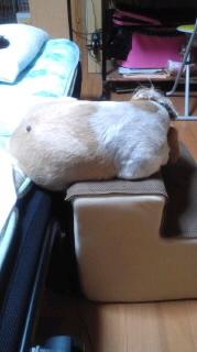 ララ母の犬バカ日記-110916_0706~010001.jpg