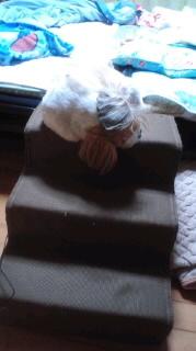 ララ母の犬バカ日記-110916_0706~020001.jpg