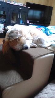 ララ母の犬バカ日記-110916_0706~030001.jpg