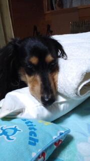 ララ母の犬バカ日記-110917_2115~010001.jpg