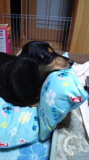 ララ母の犬バカ日記-110918_2209~010001.jpg