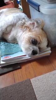 ララ母の犬バカ日記-110918_2014~020001.jpg