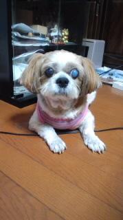 ララ母の犬バカ日記-110919_1822~010001.jpg