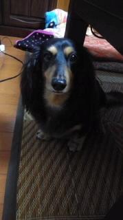 ララ母の犬バカ日記-110919_1822~030001.jpg