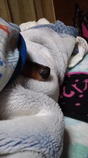 ララ母の犬バカ日記-110924_2130~010001.jpg