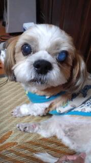 ララ母の犬バカ日記-110926_2057~010001.jpg