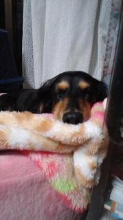 ララ母の犬バカ日記-110926_2053~010001.jpg