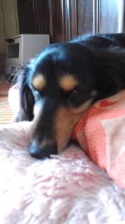 ララ母の犬バカ日記-110927_1359~010001.jpg