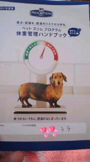 ララ母の犬バカ日記-110927_1359~0300010001.jpg