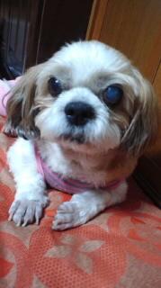 ララ母の犬バカ日記-110927_1935~020001.jpg