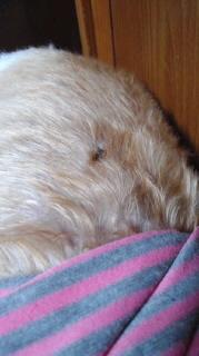 ララ母の犬バカ日記-110927_1935~030001.jpg