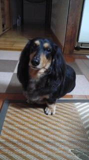 ララ母の犬バカ日記-110927_1936~010001.jpg