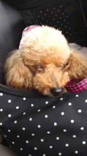 ララ母の犬バカ日記-111001_1209~010001.jpg