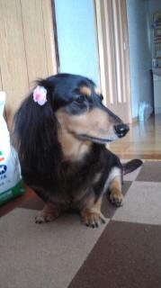 ララ母の犬バカ日記-111004_1400~020001.jpg