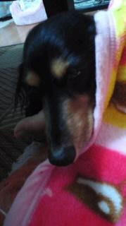 ララ母の犬バカ日記-111006_1946~010001.jpg