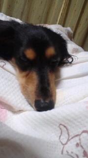 ララ母の犬バカ日記-111007_2123~010001.jpg