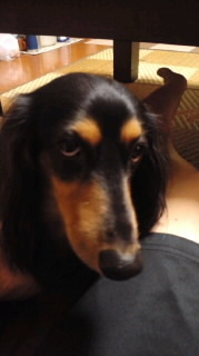 ララ母の犬バカ日記-111008_1935~030001.jpg