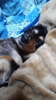 ララ母の犬バカ日記-111011_2137~010001.jpg
