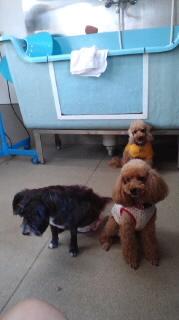 ララ母の犬バカ日記-111012_1552~020001.jpg