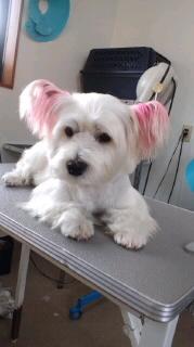 ララ母の犬バカ日記-111012_1609~010001.jpg