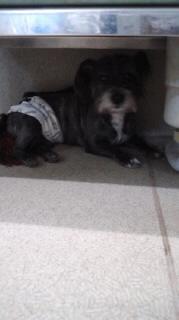 ララ母の犬バカ日記-111012_1727~020001.jpg