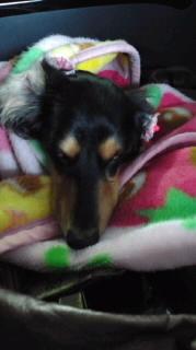 ララ母の犬バカ日記-111016_0640~010001.jpg