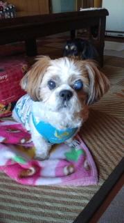 ララ母の犬バカ日記-111018_1701~010001.jpg