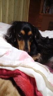 ララ母の犬バカ日記-111020_2144~020001.jpg