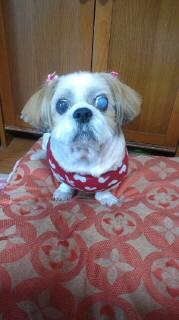 ララ母の犬バカ日記-111021_1219~010001.jpg