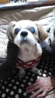 ララ母の犬バカ日記-111026_1830~010001.jpg