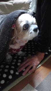 ララ母の犬バカ日記-111026_1830~030001.jpg