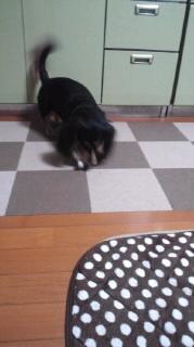 ララ母の犬バカ日記-111109_1850~020001.jpg