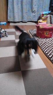 ララ母の犬バカ日記-111109_1851~010001.jpg