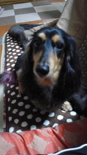 ララ母の犬バカ日記-111111_1924~010001.jpg