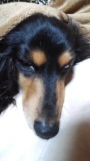 ララ母の犬バカ日記-111115_2124~010001.jpg