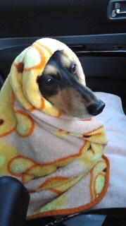 ララ母の犬バカ日記-111120_0651~010001.jpg