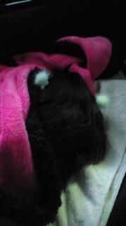 ララ母の犬バカ日記-111127_0737~010001.jpg
