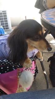 ララ母の犬バカ日記-111129_1224~010001.jpg